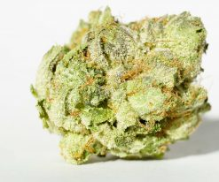 white death indica cannabis strain for sale